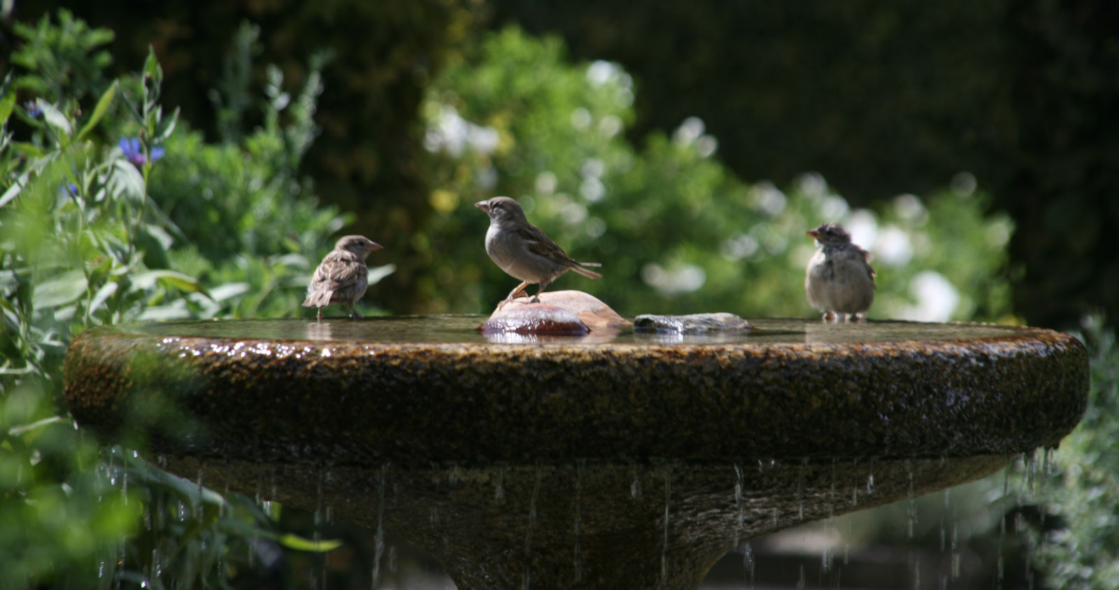 Garden of the Five Senses in Yvoire: the bath of the birds.